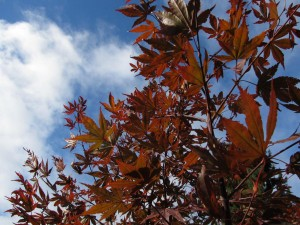 fall foliage blue sky