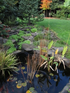 creek pond plants water