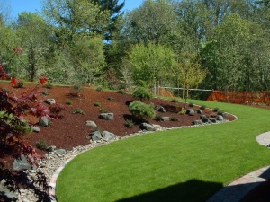 lawn slope plants