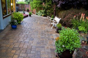 paver patio plants