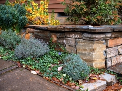 succulents among stone wall